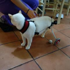Wheelchair For Cats Living Room Armchair Paralyzed Kitten Walks Again Thanks To A 3d Printed