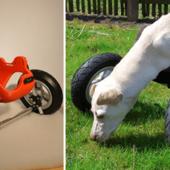 Wheelchair Dog Shower Chair For Elderly 3d Printed Open Source Adaptable Design Released