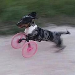 Wheelchair Dog Swing Chair Living Room 3d Printed Front Leg Lets Dogs Live Happy Quality Lives