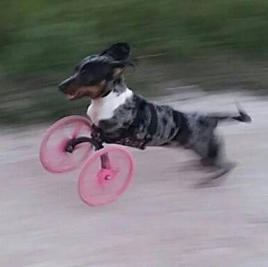 3D Printed Front Leg Wheelchair Lets Dogs Live Happy