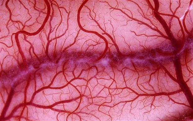 Progress towards 3D Bioprinting of blood supply: steps towards production of functional blood vessels presage production of  other viable body part replacements (4/6)