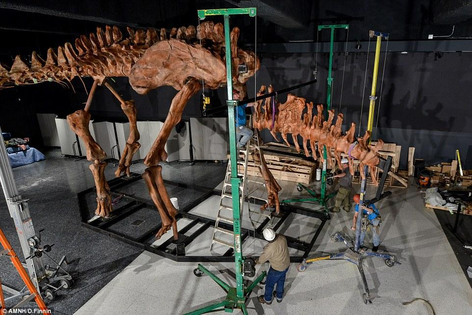 3D Scanning and 3D Printing Help Bring 122Foot Titanosaur Fossil Replica to Life  3DPrintcom