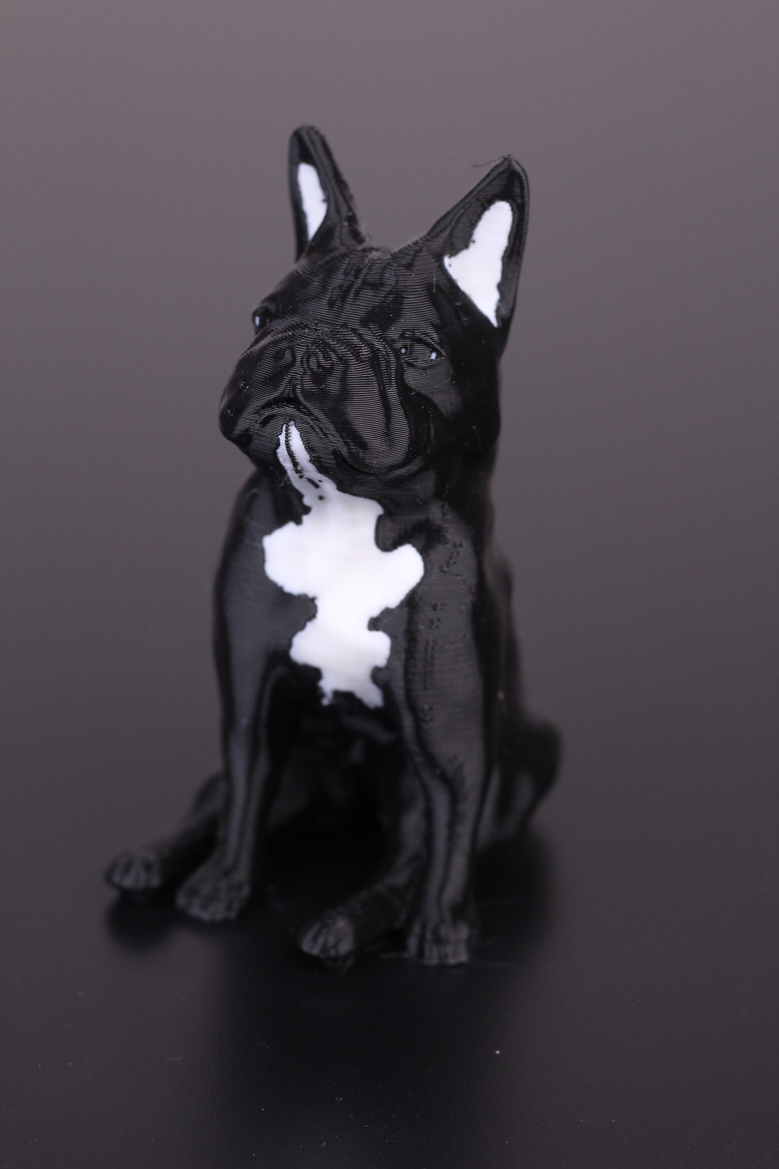 French-Bulldog-Dual-Color-print-on-Tenlog-TL-D3-Pro-5