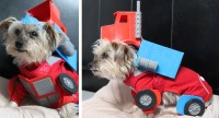 I Made My Dog Dress up as Optimus Prime for Halloween