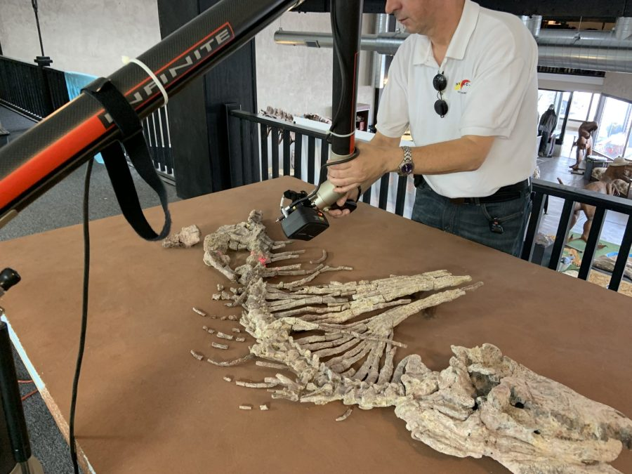 An NVision technician scans the Dimetrodon limbatus skeleton. Note the creature's elongated back spines, which face the technician. Photo via NVision.