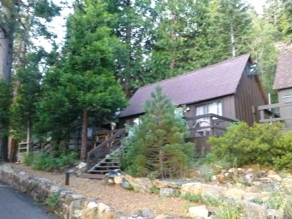 cabin woods social media detox