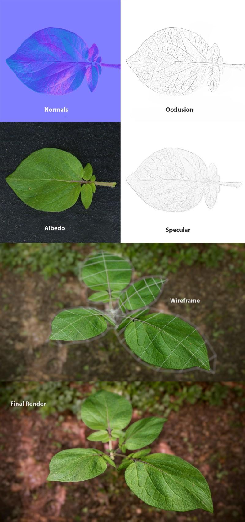 Potato_leaf_001_Render