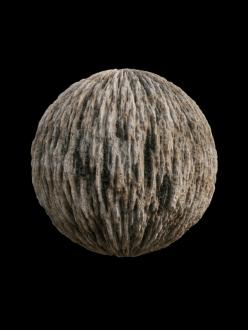 wood bark moss