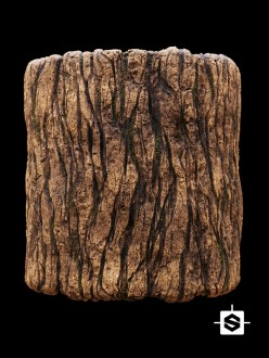 bark wood tree