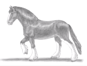 horse draw easy beginners step drawing simple