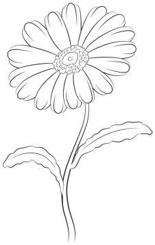 How to draw daisy