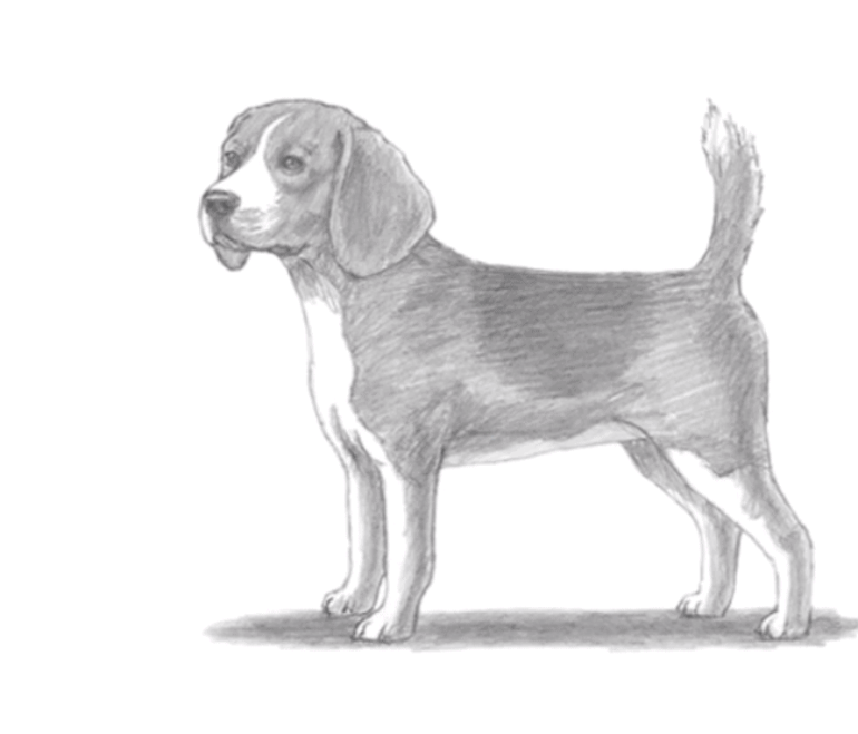 how to draw a dog step by step 7