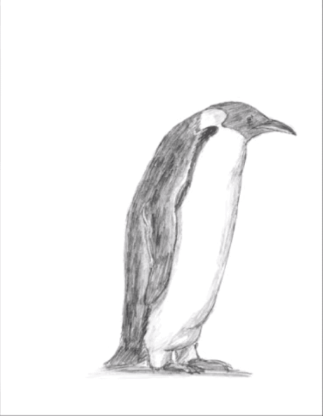 Penguin Drawing