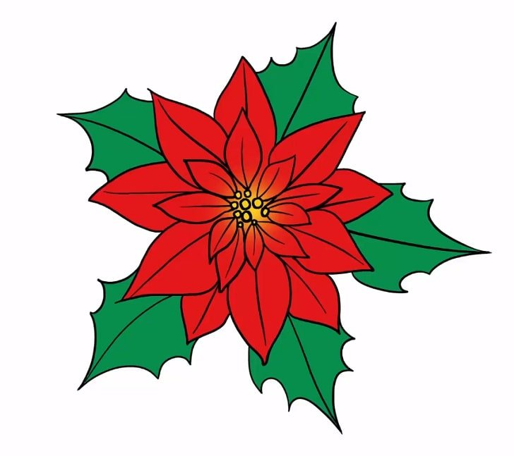How to draw a poinsettia