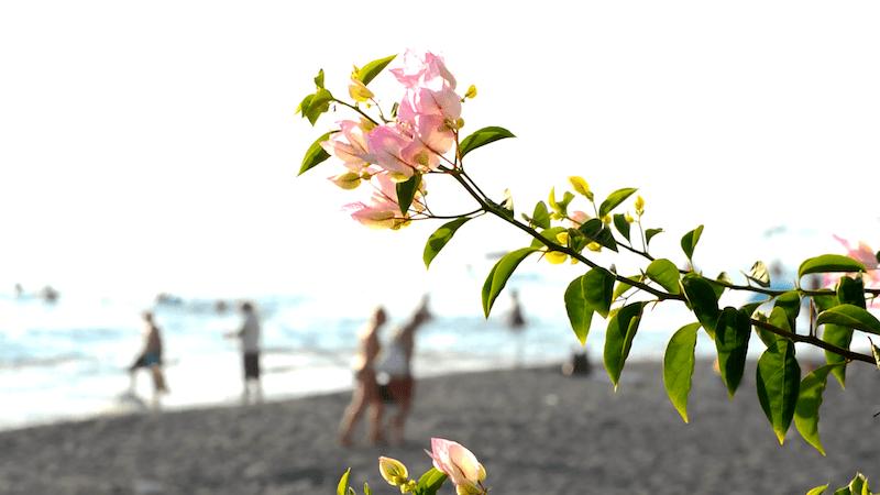 Izzys Beach Club, Mahmutlar