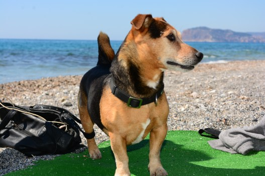 Izzy's Beach Bar - Charlie in the Dog House