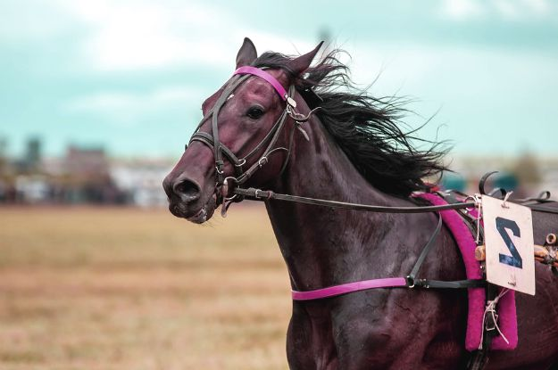 Racehorses | Surprising Reasons To Keep Vicks Vaporub In Your Cache