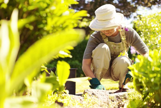 Start Gardening   Homesteading and Sustainability: How To Become Self Reliant