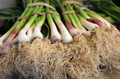 Grow your own spring onions
