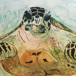 Endangered Species Hawksbill Turtle
