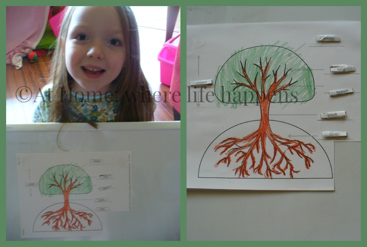 The Giving Tree Book Unit