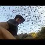 GoPro: One Million Bats