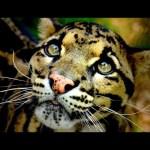 10 Rarest & Most Endangered Animals