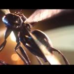 ANT-MAN Movie Clip – Hang Tight (2015) Paul Rudd Marvel Superhero Movie HD