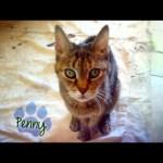 CBS Cares – Charles Osgood on Pet Adoption