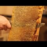 Honeycomb Is Mesmerizing