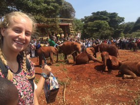 Carly and the elephants