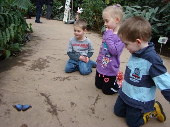 Watching a Blue Morpho Butterfly that had landed on the floor