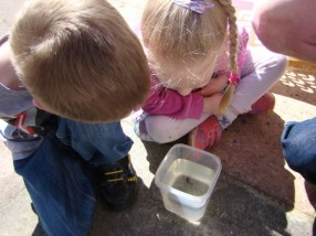 Viewing their pond dipping catch