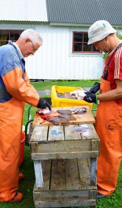 Kapten Anders och Anders rensar fisk på löpande band.