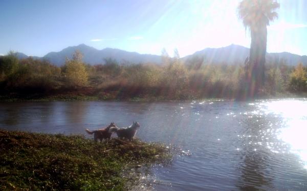 Jonas Merlin River
