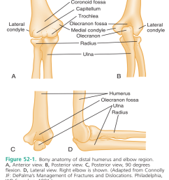 the elbow allows for pronation supination flexion extension [ 1440 x 1797 Pixel ]