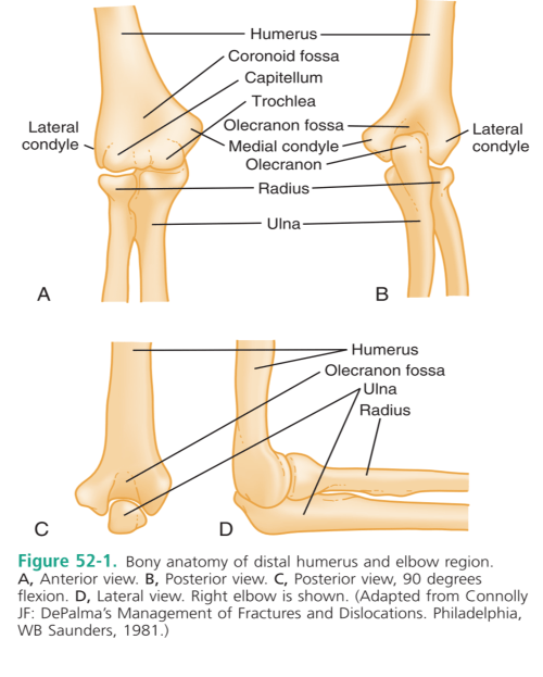 small resolution of the elbow allows for pronation supination flexion extension