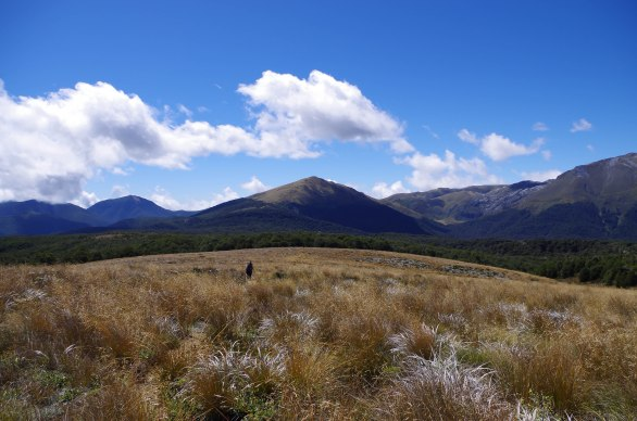 The grasses on the Tablelands in the Kahurangi National Park, South Island, New Zealand are found only in this part of the world.