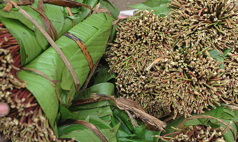 What Is Khat? • High Times