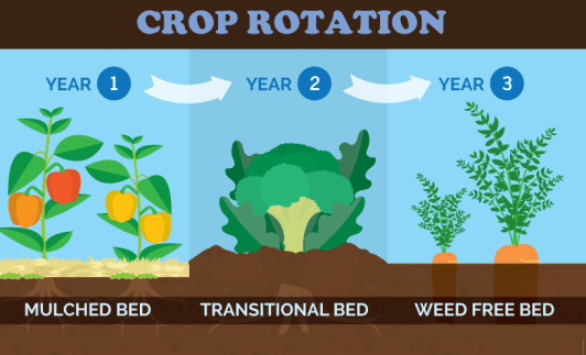 Annual Crop Rotation Diagram