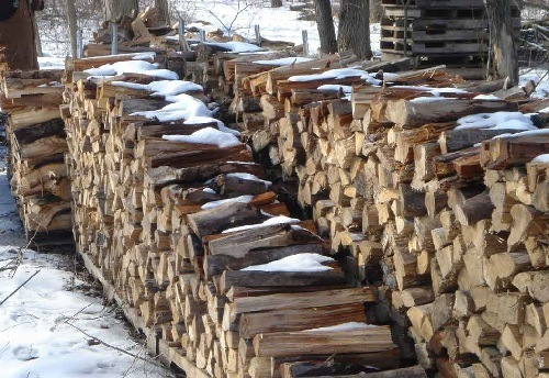 Firewood Lying in Yard