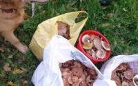 Після збирання грибів