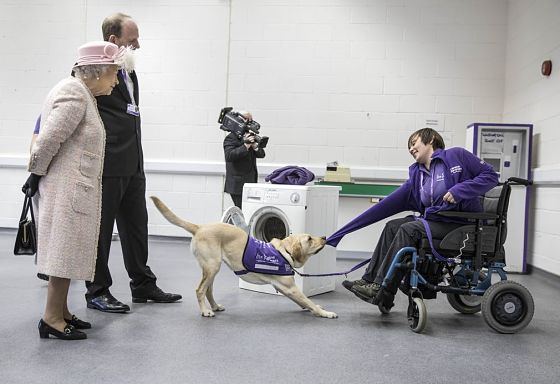 Лабрадор та інвалід