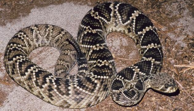 Змія вкусила 13-річного хлопчика