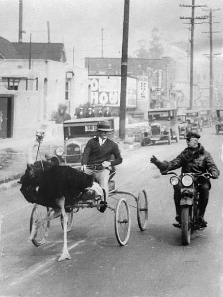 Поліцейський зупиняє візок, у який запряжено страуса
