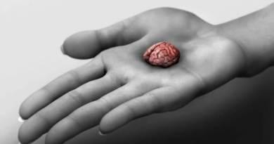 перший міні-мозок