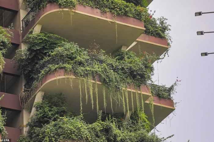 будинок з рослинами на балконі
