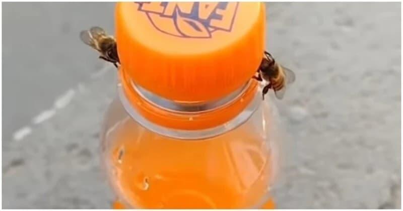 """Дві бджоли змогли відкрутити корок пляшки з """"Фантою"""" - відео"""