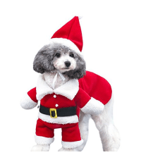 The gallery for --> Dogs In Santa Costumes