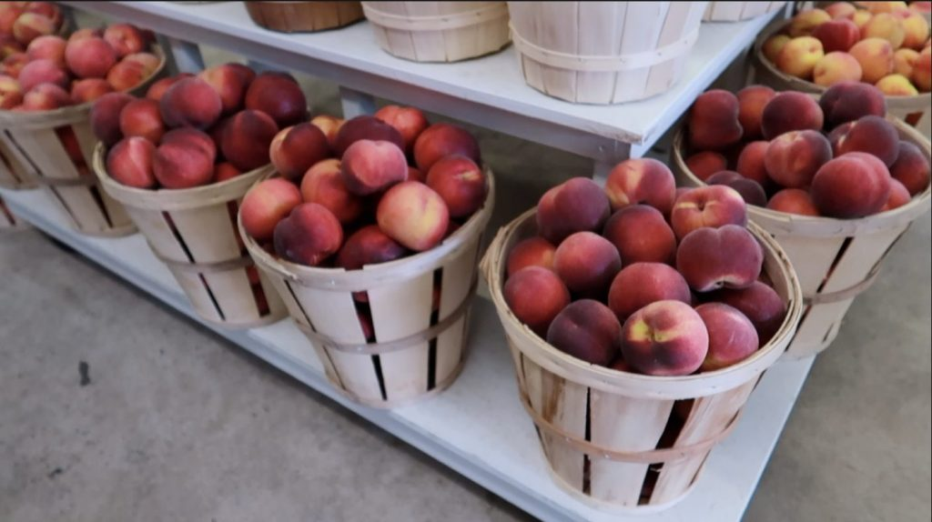 buckets of peaches